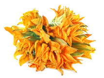 Edible pumpkin flower Stock Images