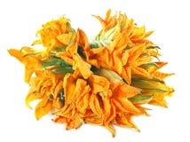 Edible pumpkin flower Stock Images