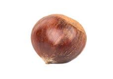 Edible raw chestnut Stock Photography