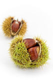 Edible, Ripe Chestnuts - Isolated On White Backgro Stock Photo