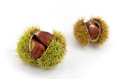 Edible, ripe chestnuts - isolated on white backgro royalty free stock images