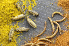 Edible roasted insects Royalty Free Stock Photography