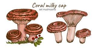 Edible russule mushroom