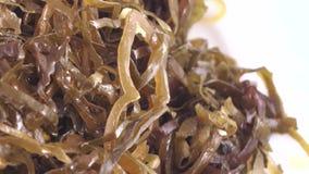 Seaweed Edible in bulk. Edible sea kale in bulk stock footage