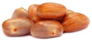Edible seeds of jackfruit Royalty Free Stock Photo