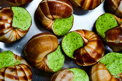 Edible snails Stock Image