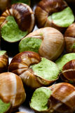 Edible snails Royalty Free Stock Photos