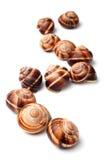 Edible snails (escargot) Royalty Free Stock Photos