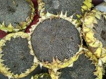 Edible sunflower seeds Stock Photography