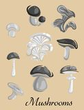 Edible and toxic forest Mushrooms placard Royalty Free Stock Images