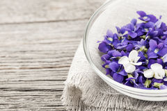 Edible violets in bowl Royalty Free Stock Photo