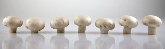 Edible white champignon mushrooms Stock Photography