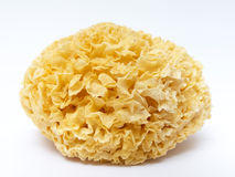 Edible white fungus Stock Photos
