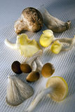 Edible wild mushrooms. A selection of edible wild mushrooms including:  Shitake, wild mushroom, Grey Oyster, Yellow Oyster, Eryngi and Black Poplar Stock Photography