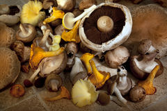 Edible Wild Mushrooms Stock Photos