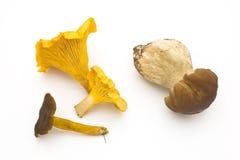 Edible wild mushrooms. Fall season, chanterelles, funnel chanterelle, cep Royalty Free Stock Images