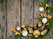 Edible wild mushrooms, boletus, russule, chanterelles on the wooden background. Royalty Free Stock Photo