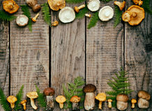 Edible wild mushrooms, boletus, russule, chanterelles on the wooden background. Royalty Free Stock Photography