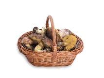 Edible wild mushrooms in a brown wicker basket Royalty Free Stock Photos