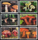 Edible wild mushrooms Stock Photos