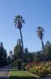 Edifício e palmeiras do Capitólio de Califórnia Fotos de Stock Royalty Free
