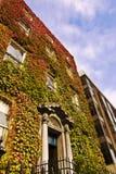 Edifício folheado de Dublin da hera Imagem de Stock Royalty Free