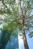 Edifício verde Imagem de Stock Royalty Free