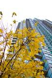 Edifícios & árvore elevados da skyline Imagem de Stock