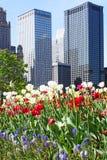 Edifícios de Chicago com flores Fotografia de Stock Royalty Free