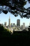 Edifici di San Francisco dagli alberi Immagini Stock Libere da Diritti