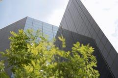 Edifici e foglie verdi di Corpoate Fotografie Stock
