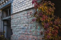 Edificio abandonado con las uvas salvajes en la pared fotos de archivo libres de regalías
