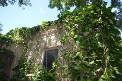 Edificio abandonado misterioso en la selva Fotos de archivo libres de regalías
