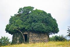 Edificio agrícola de piedra superado por un árbol Imagenes de archivo