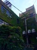 Edificio cubierto con las vides en sec; punto usado Foto de archivo libre de regalías