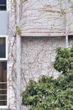 Edificio cubierto por la planta de vid Imagen de archivo libre de regalías