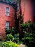 Edificio de ladrillo con la hiedra que crece las paredes Foto de archivo libre de regalías