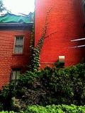 Edificio de ladrillo con la hiedra que crece las paredes Imagenes de archivo