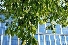 Edificio de oficinas moderno con las hojas verdes Imágenes de archivo libres de regalías