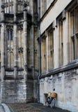 Edificio de Oxford con la bicicleta Fotografía de archivo