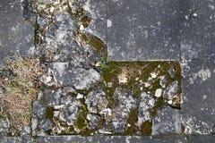 Edificio de piedra, cubierto con el musgo o el liquen En un cierto plazo, afectado Imagen de archivo libre de regalías