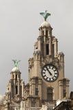 Edificio del hígado Imagen de archivo libre de regalías