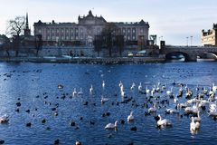 Edificio del parlamento de Estocolmo Suecia Riksdag fotografía de archivo