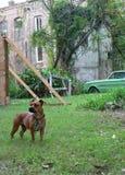 Edificio del perro y de la reducción Foto de archivo libre de regalías