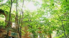 Edificio destruido viejo en bosque almacen de video