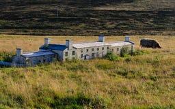Edificio miniatura comparado a la vaca Imágenes de archivo libres de regalías