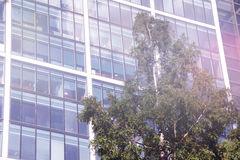 Edificio per uffici con un albero Fotografia Stock