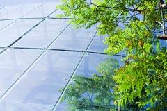 Edificio per uffici verde di affari Fotografie Stock Libere da Diritti