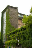 Edificio viejo con la hiedra Imagenes de archivo