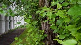 Edificio viejo con los arcos redondos en el fondo de árboles con follaje verde grande almacen de metraje de vídeo